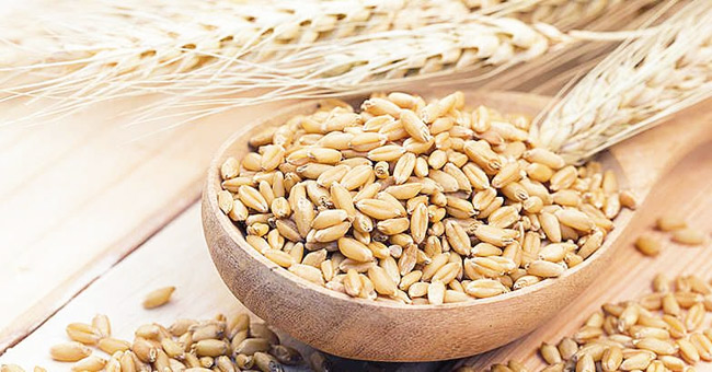 Barley a Good Option to Manage Your Appetite